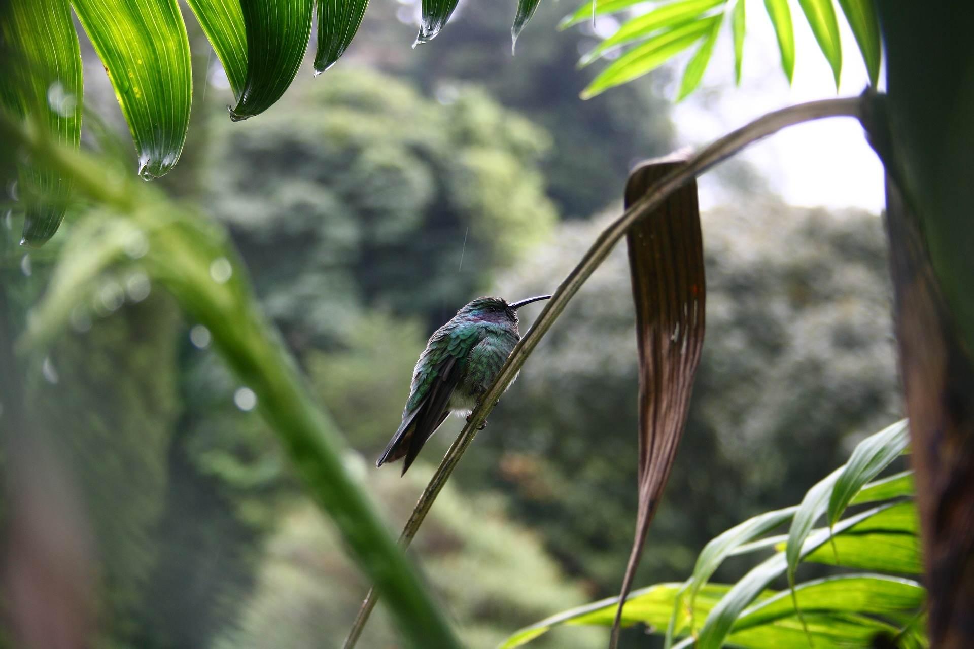 Panama Individualreisen - Touren und Rundreisen 5