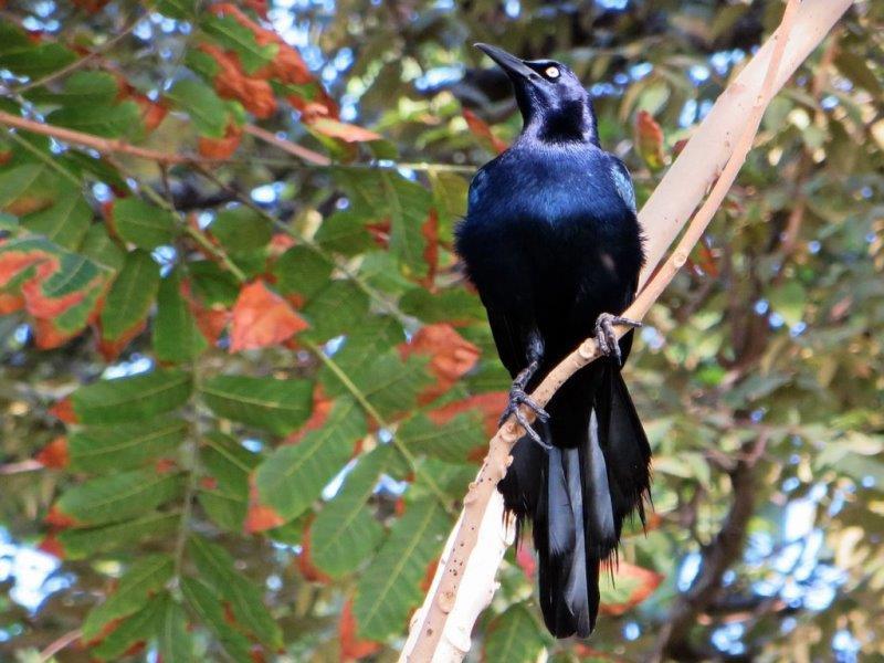 Vogel-Stadtpark-Panama